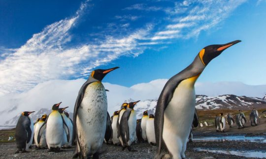 penguin colony wiped out